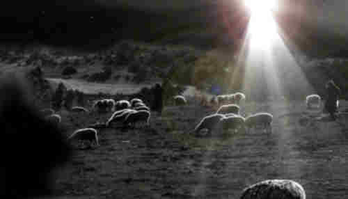 While shepherds watched their flocks by