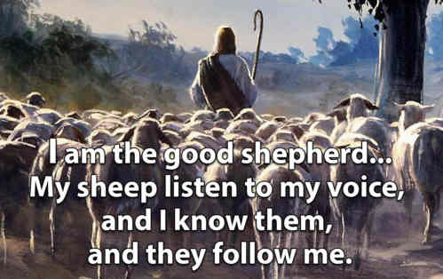 Loving Shepherd of Thy sheep Keep Thy