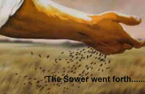 The sower went forth sowing The seed
